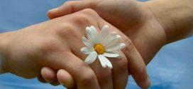 يُصافِحني الأقحوانُ و الصُّبحُ إشْراقٌ و انْشِراحُ !