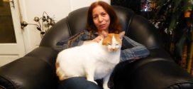 سجعية القط بيبو: